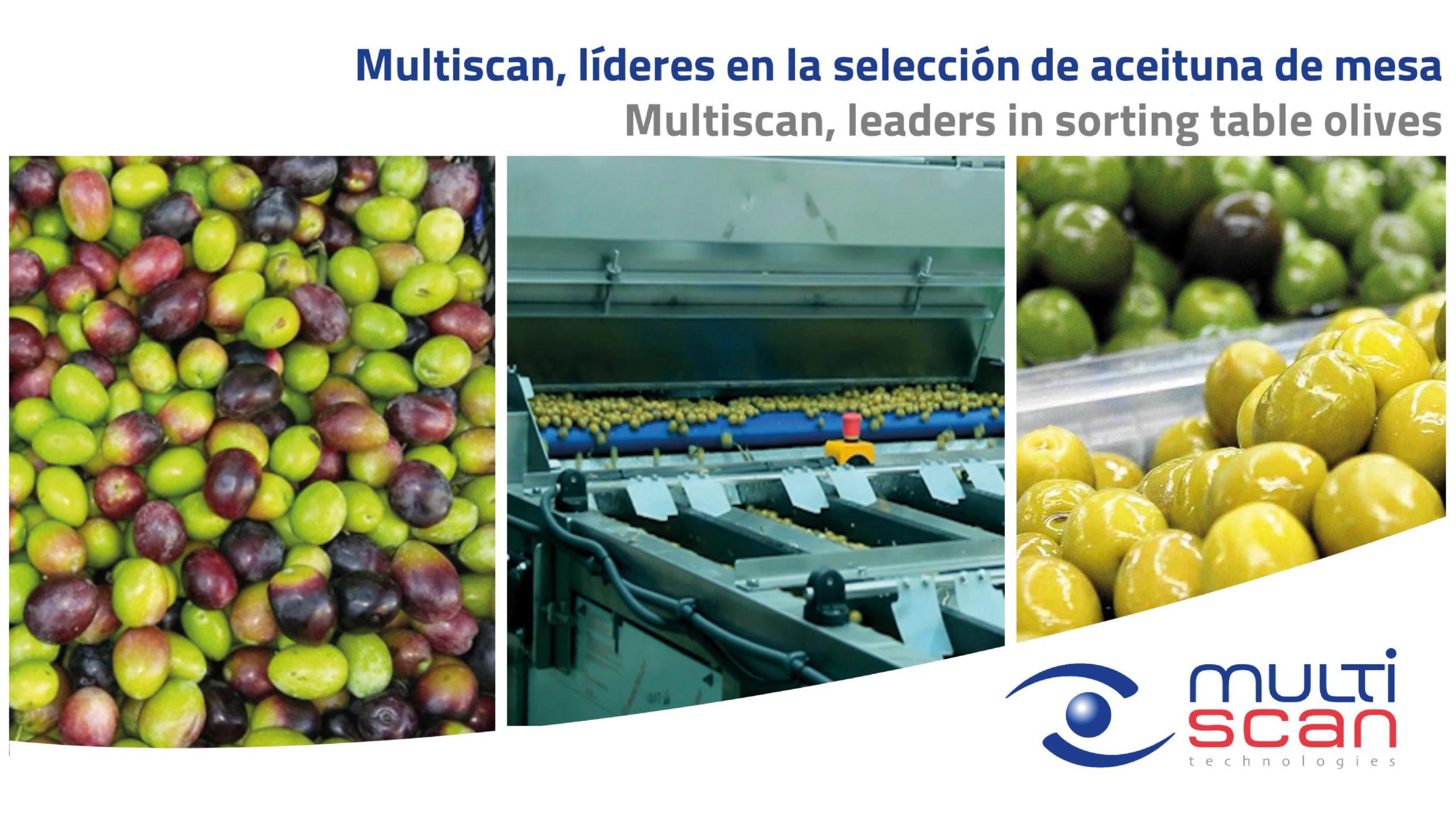 Multiscan, líderes en la selección de aceituna de mesa